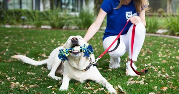 An IFPG Consultant's Candidate Joins The Fetch! Pet Care Franchise in Minnesota