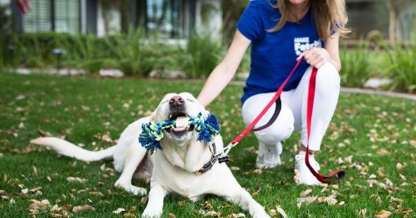 The Fetch! Pet Care Franchise Awards Two Territories in North Carolina!