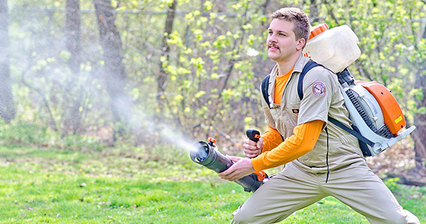 Hear the Buzz?  Mosquito Hunters and IFPG are Swarming Again!