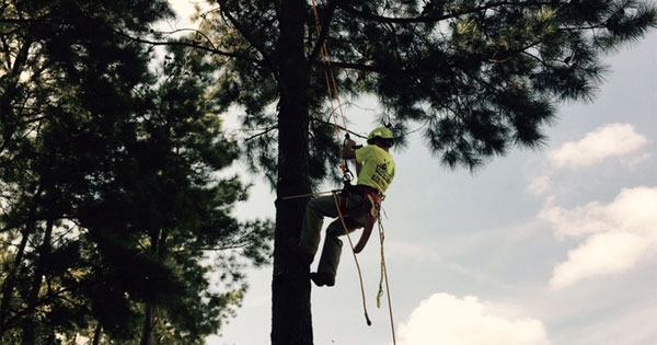 IFPG Member Monster Tree Service is Cutting Down their Competition with FOUR Recently Closed Deals!