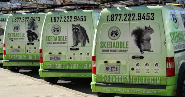 IFPG Member Skedaddle Grows in the US with the Help of an IFPG Consultant!